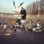 bird man of waterloo