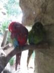 San Antonio Zoo 14