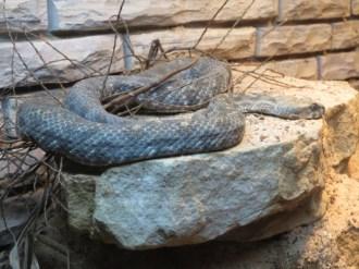 San Antonio Zoo 19