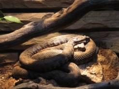 San Antonio Zoo 20
