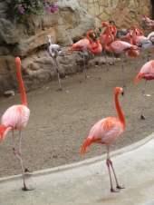 San Antonio Zoo 4