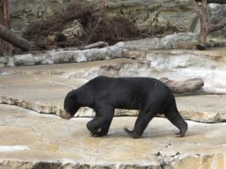 San Antonio Zoo 7