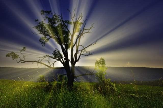 Big Tree At Dawn