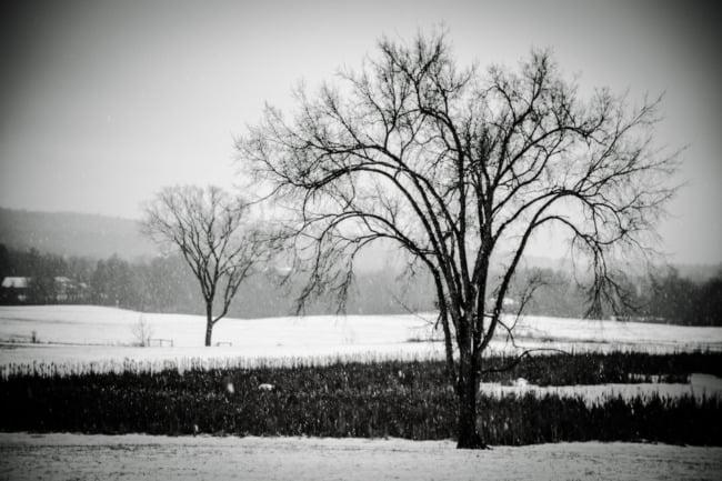 Hiemal Landscape