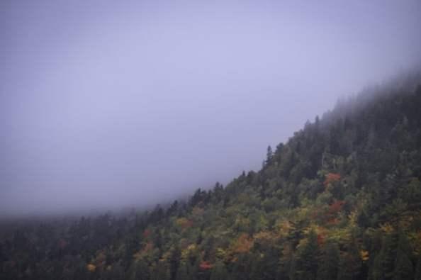 mountainside-fog