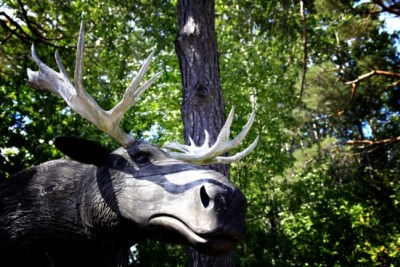 mr-moose