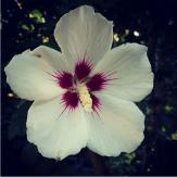 tomslatin-instagram-8-18-2015
