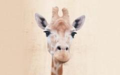 card.com giraffe design for debit card