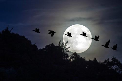 満月を背に飛んでゆく7羽のガチョウ