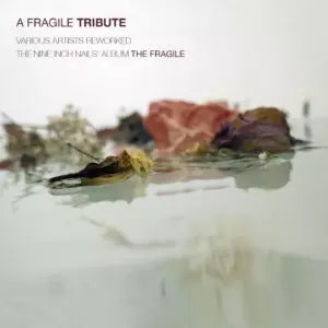 A Fragile Tribute