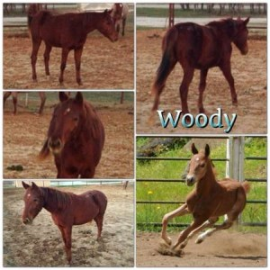 Nice Cutting Bred Colt