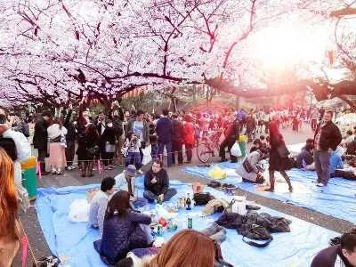 海外の人-日本-観光-上野-桜