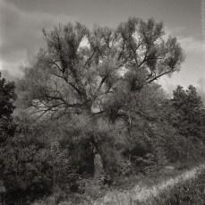 darkroom_one_19