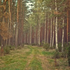 forest_1_03