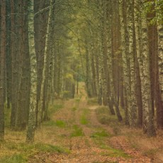 forest_1_11