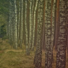 forest_1_13