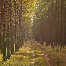 forest_1_15