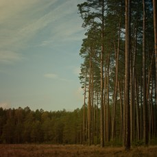 forest_2_22