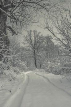 winter_fell_11