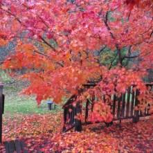 Appledore deck, autumn