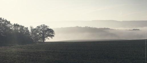 Zelené mlhavé ráno