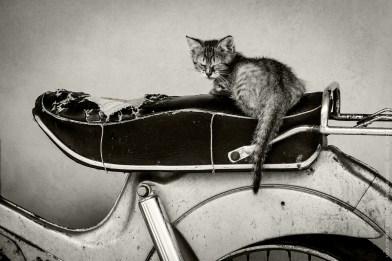 Moto kotě