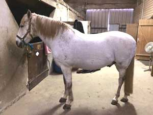 Avis tondeuses chevaux Liveryman