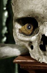 25102012: Foto fatte nell'attimo perfetto: L'occhio della...farfalla