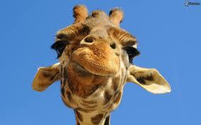 indovinello whatsapp giraffa