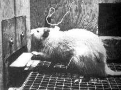 14092017: Esperimenti sugli animali: I topi di Russell Church (numero 3)