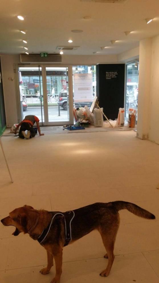 Während Sven fleißig Bodenplatten verlegt, überwacht Hündin Smila die Qualität.