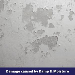 Damage cause by Damp & Moisture