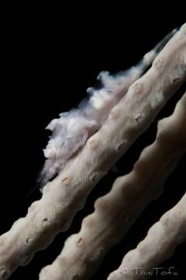 Mar Menuda, Tossa de Mar. 18m. 13ºC.