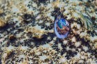 Mar Menuda, Tossa de Mar. 10m. 13ºC.