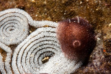 Mar Menuda, Tossa de Mar. 15m. 12ºC.