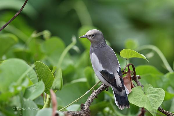tonjiandsylviasbirdlist.com