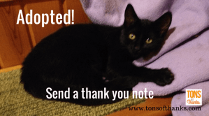 Write a thank you note for kitten adoptions