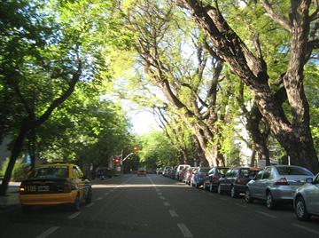 Trees in Mendoza