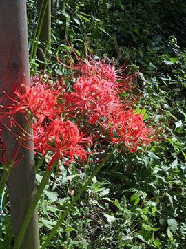 Local flora