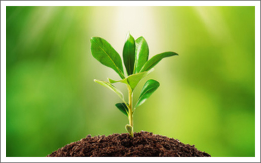 Image result for spiritual growth