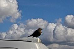 Heroic-Bird