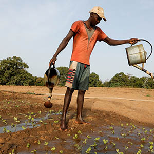 Agric African entrepreneur wetting plants