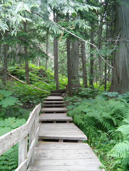 Giant Cedar boardwalk