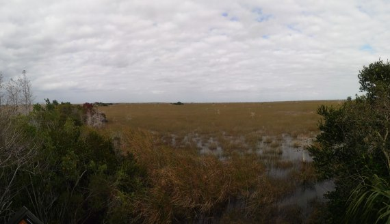 Everglades National Park pano