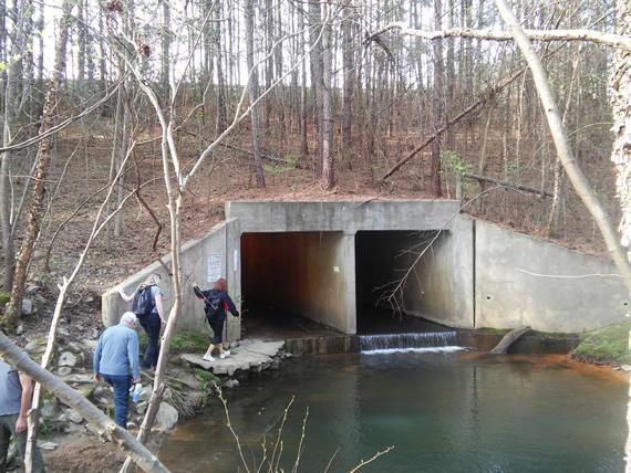 Schneck Forest Richland Creek Loblolly hike