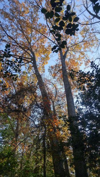 Congaree National Park foliage