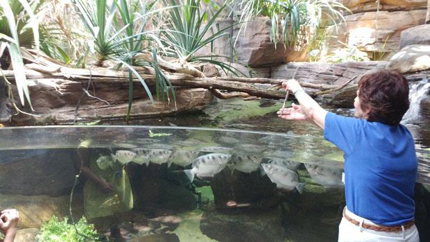 Baltimore National Aquarium archerfish