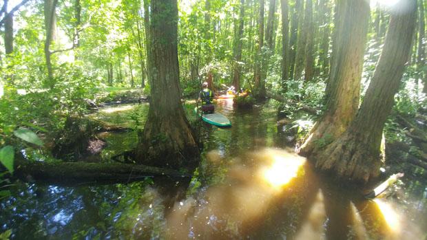 Robertson Millpond Preserve SUP