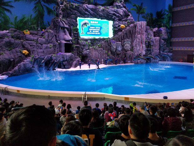 Chimelong dolphin show