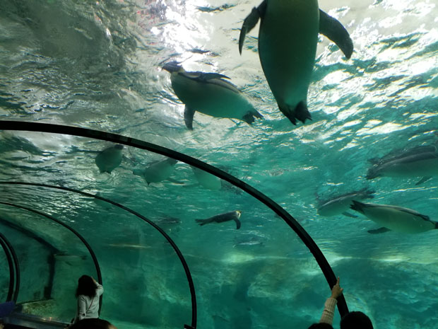 Chimelong penguin exhibit